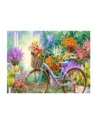 מספר וצבע – אופניים