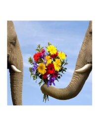 מספר וצבע – זר פילים
