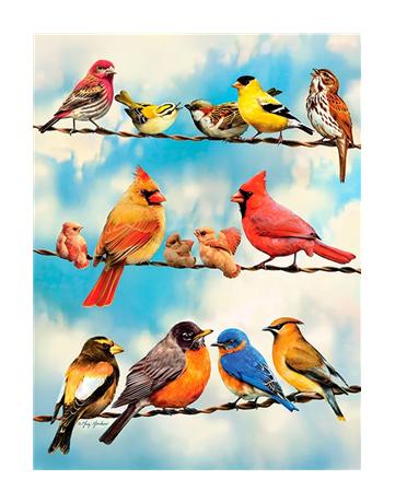 מספר וצבע – ציפורים