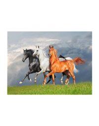 מספר וצבע – שלושה סוסים
